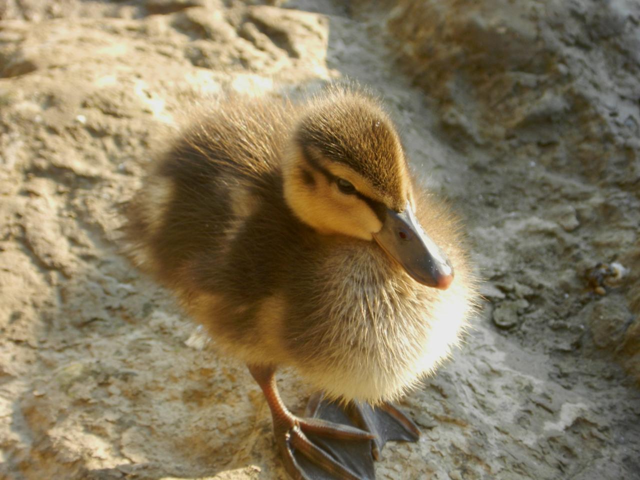 Les oiseaux des lacs et rivières