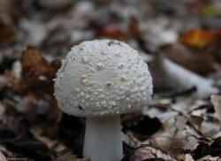 champignon-11.jpg