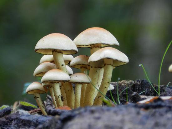champignon103.jpg