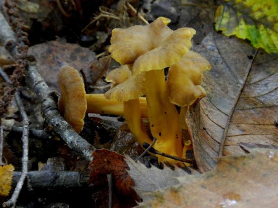 champignon176.jpg