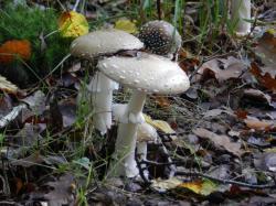champignon210.jpg