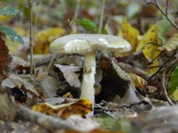 champignon264.jpg