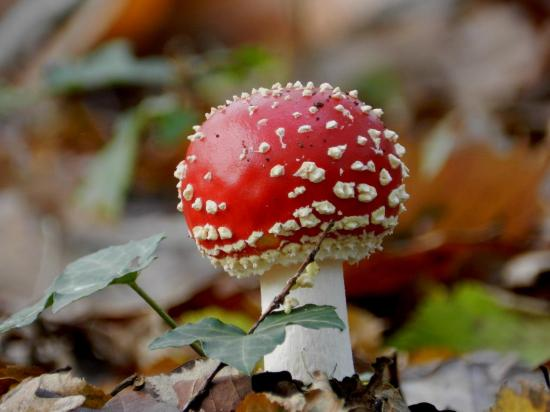 champignon302.jpg