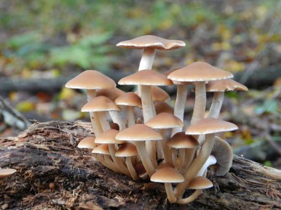 champignon65.jpg