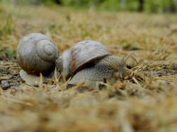 escargot-de-bourgogne20.jpg